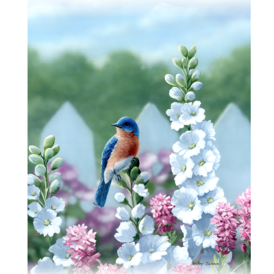 Eastern Bluebird with Delphiniums