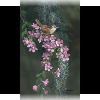 Woodland Wren