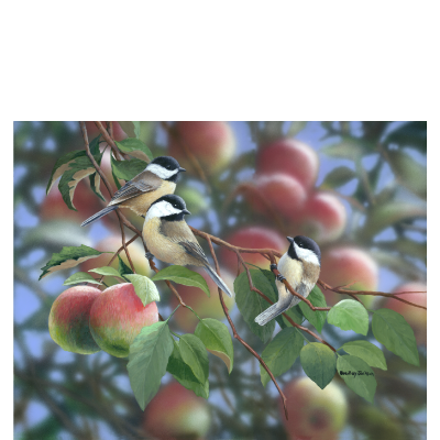 Apple Orchard - Chickadees