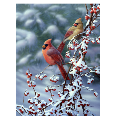 Cardinals n snow bradley jackson - Pictures of cardinals in snow ...