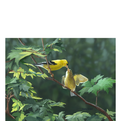 The Encounter - American Goldfinches
