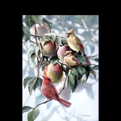 Fledgeling - Cardinals