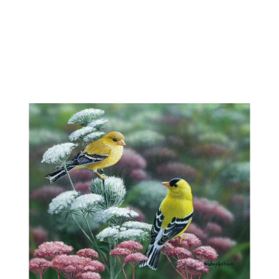 Gold & Lace – American Goldfinch