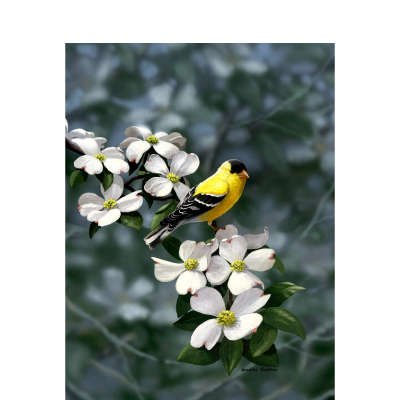 Golden Dogwood – American Goldfinch