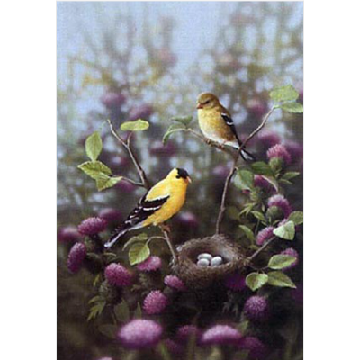 In the Thistle – American Goldfinch