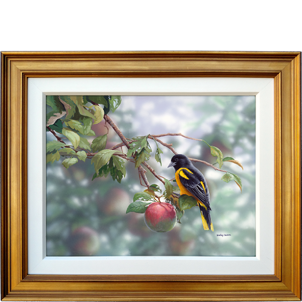 Orchard Orioles - original artwork