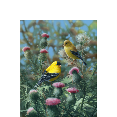 Pink 'n' Gold – American Goldfinch