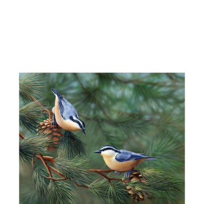 Playful Pair – Nuthatches