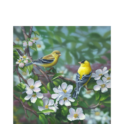 Signs of Spring – American Goldfinch