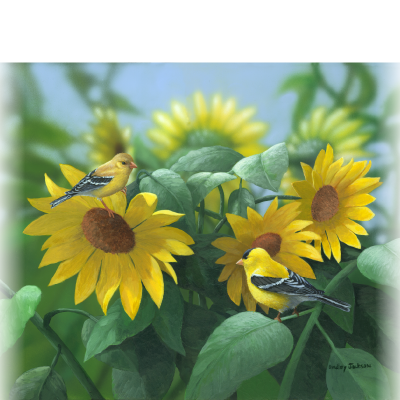 Sunflowers – American Goldfinch