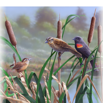 Surprise Encounter – Red Winged Blackbirds & Carolina Wren