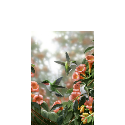 Trumpet Hummingbirds – Hummingbirds