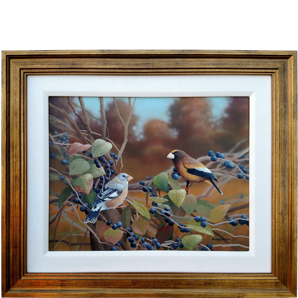 In the Vines - Evening Grosbeaks - original artwork